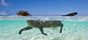 Кот плывет на море