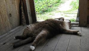 Котяра лежит на полу в деревне