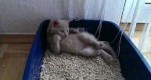 Котёнок отдыхает дома в песочнице